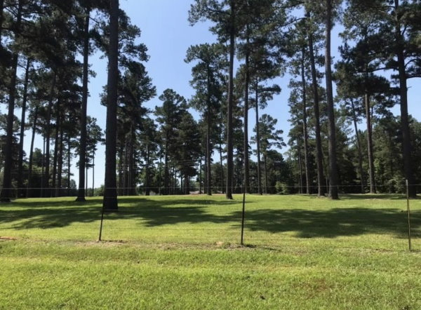 Lawnmowing fence area in yard - HIS Way Services, Texarkana